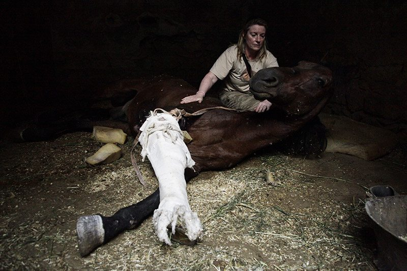 Horse in need of care