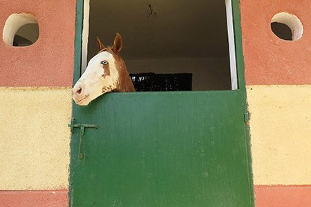 Soul, a 2-year-old who has been injured in a car accident, is one of the first EEA patients to enjoy the comfort of our new stables: extra clean bedding, no competition for food and cool temperatures in the heat of day.